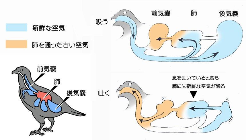 気嚢システム