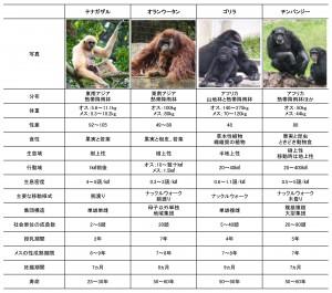 類人猿比較
